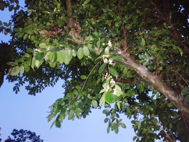 Verde Sensuntepeque 2014-05-12 18.26.36